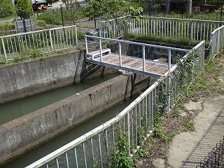ここから潜る見沼代用水