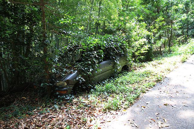 途中、草に覆われた車が。