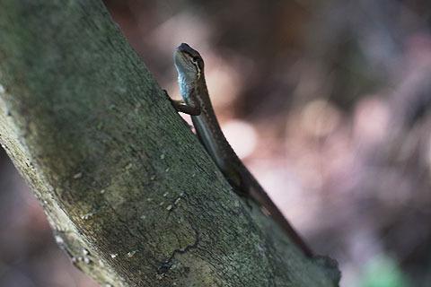あちこちの草むらでガサゴソ音がするので見たらカナヘビだった。子供の時以来、久しぶりに見た。