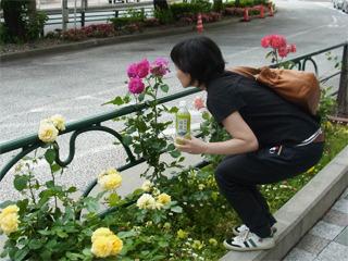 気づけば花もきれいだね