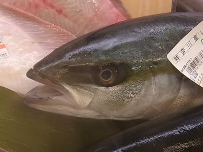 唇が大きな魚の方がよいのだろうか