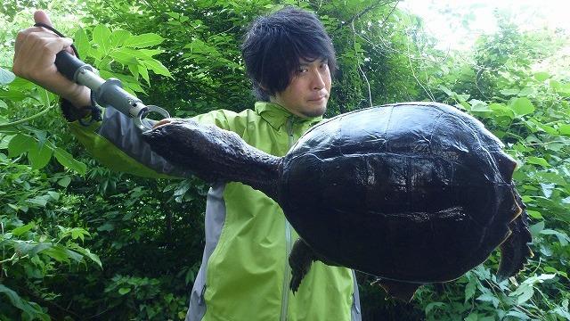 これがカミツキガメだ!!…絶対真似しないでください。