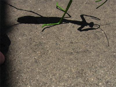 そしてなぜか作り物の虫の影を撮らされる
