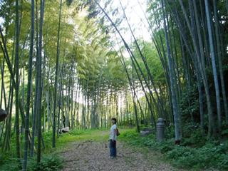 私の好きな竹林もあり