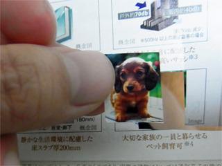 あ、可愛い犬がいた!テンションがちょっとあがる。