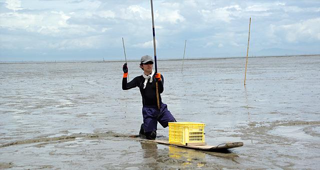 有明海までムツゴロウを釣りに行きました。