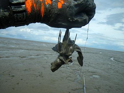 釣れたー!7月に釣ってやったー!