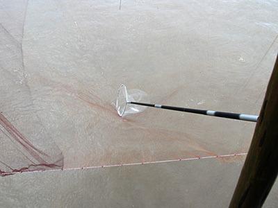 四手網に入った魚を、長いタモで網をポンと叩くようにして掬う。