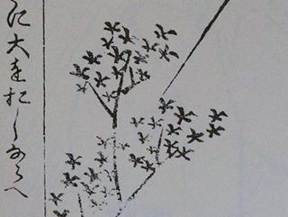 大と入を逆さに描いて木を表すのはなるほどと思った。