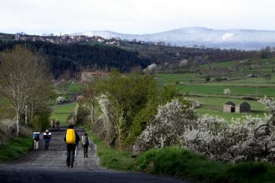 ル・ピュイの町を出てからは牧場を歩く