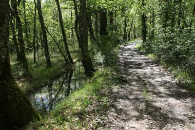 森の道は比較的平らだ