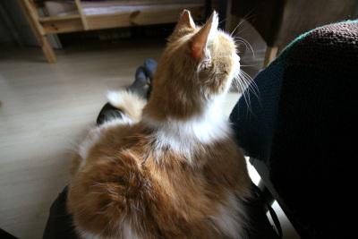 この猫がまた人懐っこくてかわいい