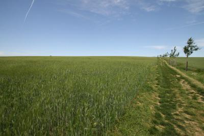一面に広がる麦畑に癒される