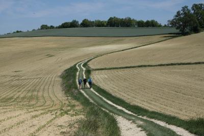 植えられたばかりのトウモロコシ畑の中を行く