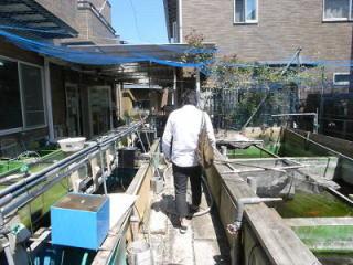金魚団地の一角にある「佐々木養魚場」