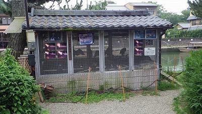 鶏小屋ならぬ鵜小屋があった。さすが鵜飼で有名な宇治川だ。