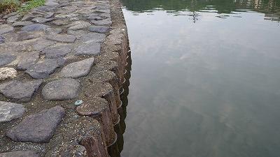 こういうでこぼこした水中の壁面が怪しい。