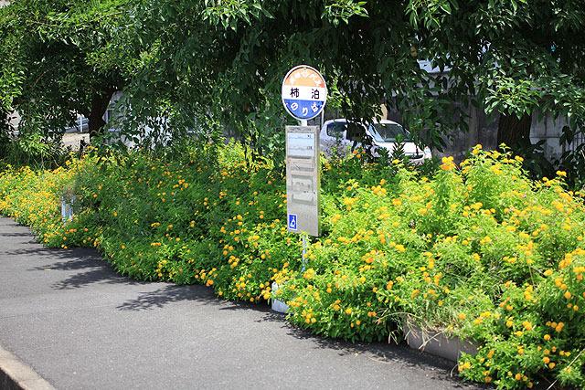 花があふれかえってるバス停も。