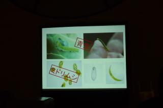 誤解されがちだがミドリムシは「虫」ではなく藻の仲間なのだ