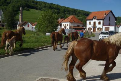村の中を馬がダイナミックに疾走する