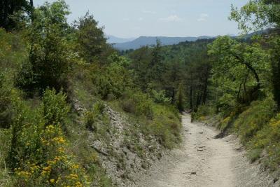 山道も踏み固められているので割と楽