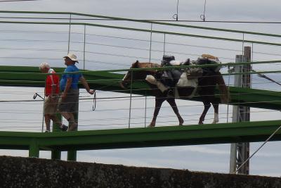 陸橋を越える姿はなんともシュールだ