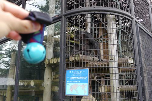 ちょうどエサの時間だったらしく、チンパンジーはおいしそうにバナナを食べていた。