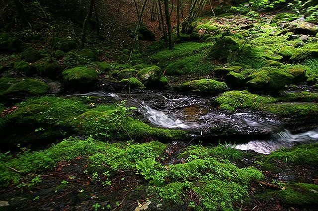 苔むす岩が転がる沢沿いを歩きます。