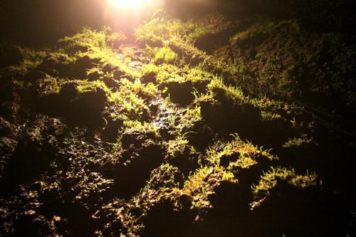 ライトに照らされた部分、なんか植物が生えちゃってる