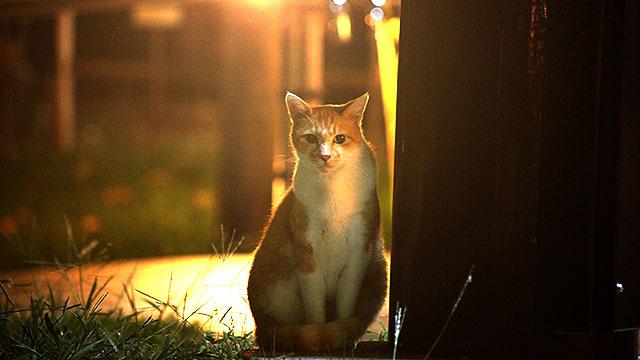 猫の写真を撮るなら夜です。