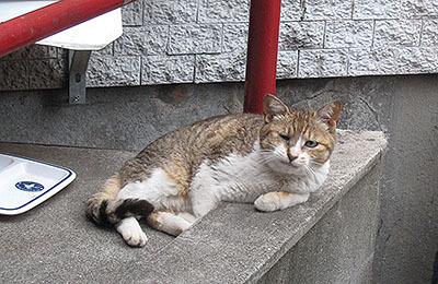 オッサンみたいな猫にガンつけられた。