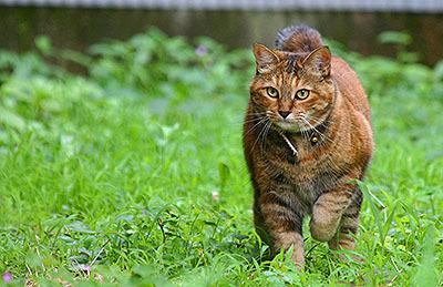 中野で見たどこかの飼い猫。太ってて可愛かった。