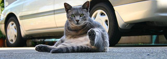 江ノ島の猫。しばらく猫撮影で江ノ島に行ってないな。