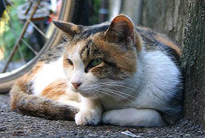 これも江ノ島の猫。ジト目。