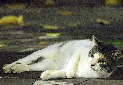 昼間の焼けた石畳にはいないが、夜は遊歩道の石畳でゴロゴロ転がっている。