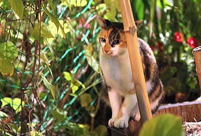 この三毛猫は人なつこくて可愛かった。推定2歳。