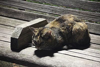 ベンチに影がうつっていて可愛い。
