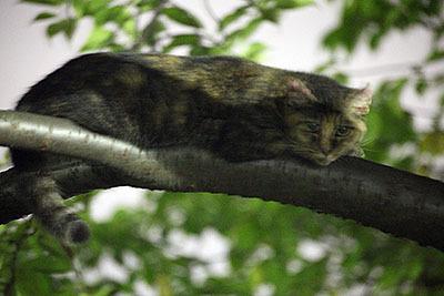 上の写真とは別の猫です。木に登っててチェシャ猫状態。ちょっとブレた。