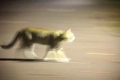 すごく素早く見えて、実は普通に歩いているだけ。