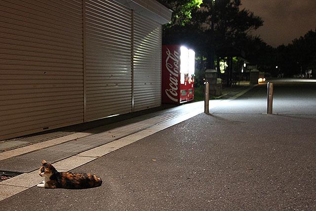 閉まった売店の前でくつろぐ三毛猫。格好いいし可愛い。