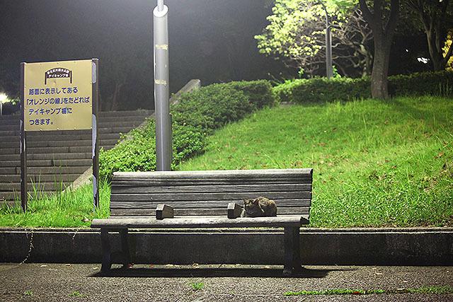 街灯の下の猫はなんだか良い。