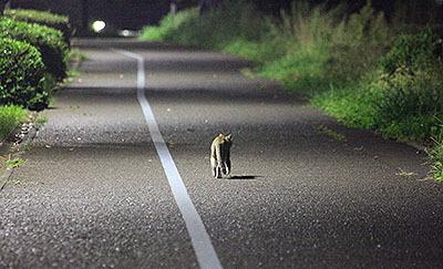 草むらの闇を目指して走る猫。渋い。