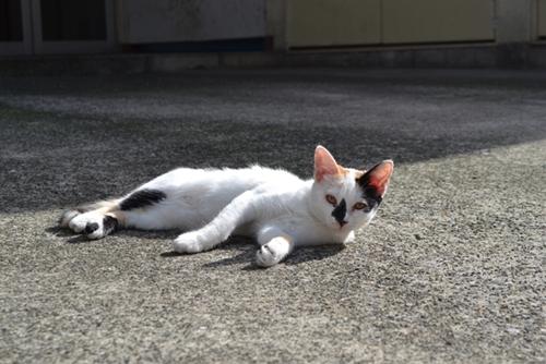 地主くん渾身の一枚「巣鴨の猫」