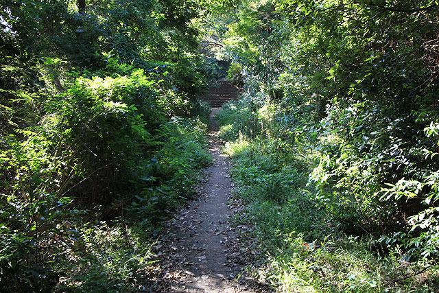 どこに行くか分からない道が森の中に伸びている。