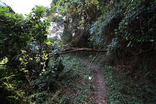 倒木が行く手を阻む。