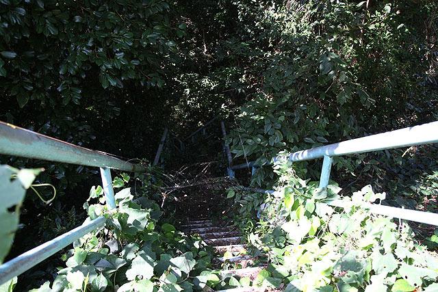 その脇に下へ下ってゆく階段がある。こちらも相当なジャングル。虎が飛びかかってきてもおかしくない雰囲気。