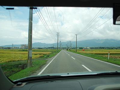 トキを探しながら運転をすると、わき見運転ならぬトキ見運転で事故を起こしがち(佐渡あるある)。