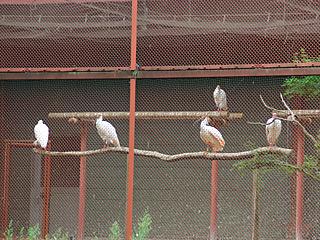 放鳥されたら自分でエサを捕れるようになるものなのだろうか。