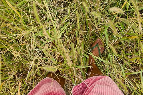 これがすごい草むらなのだ。かゆい。
