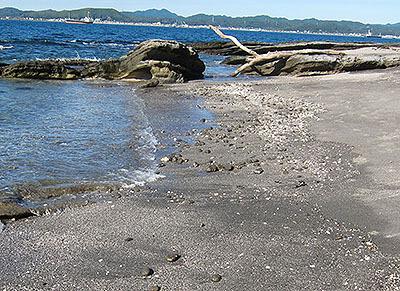 海岸には石ころとか貝殻がいっぱい落ちてた。